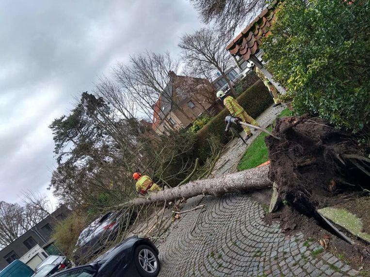 Een boom waaide om in de Callaertswalledreef. Enkele voertuigen raakten licht beschadigd.