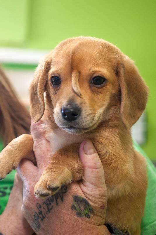 De hoop is dat Narwhal met zijn aparte voorkomen andere honden kan redden.