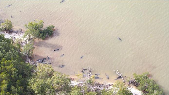 De gestrande dolfijnen.
