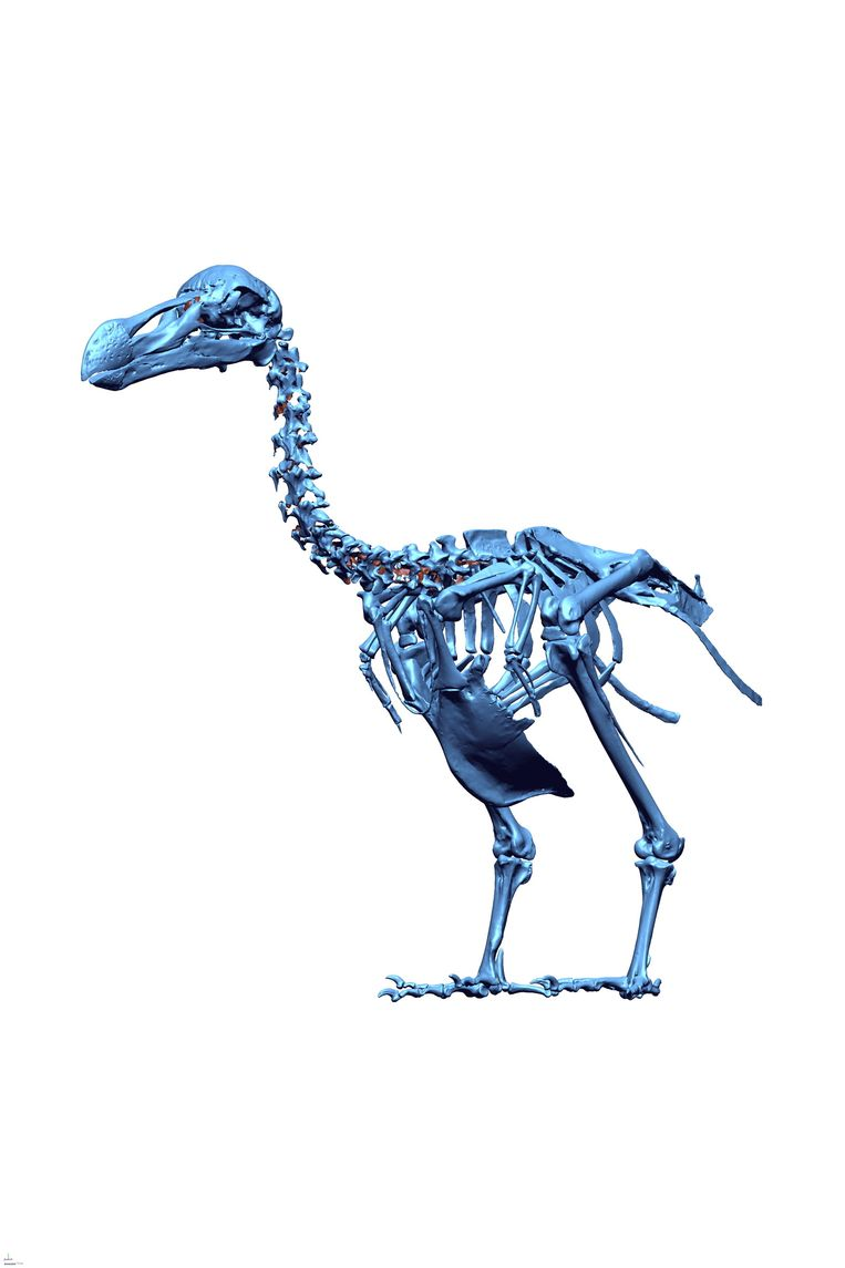 null Beeld Dodo Research Programma