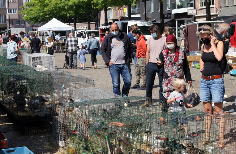 Een gezellige drukte op de dierenmarkt in Mol en iedereen hield zich aan de regels.