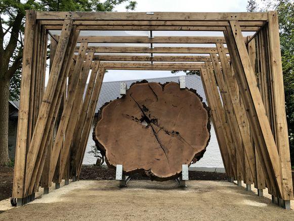 De vijf ton wegende schijf van een 2000 jaar oude mammoetboom is één van de pronkstukken in het HOUTlab.