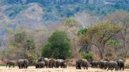 """Elk jaar opnieuw werden in Afrikaans reservaat duizenden olifanten gedood, nu al een heel jaar zonder stroperij: """"Enorm hoopgevend"""""""