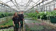 Leerlingen Tuinbouwschool verkopen 'eigen kweek'