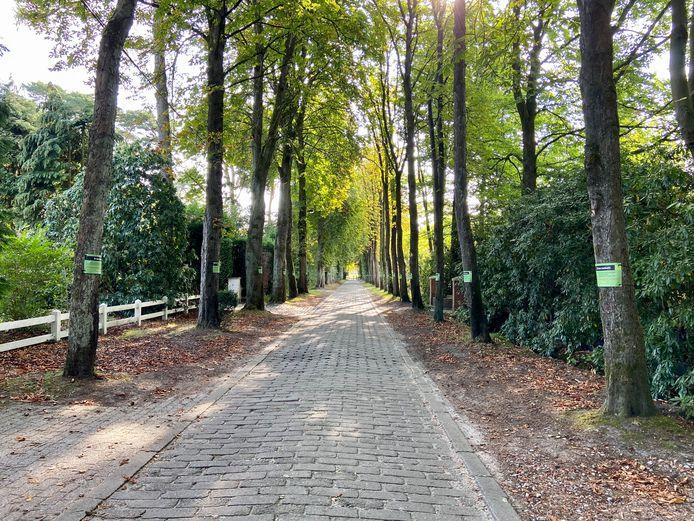 Iedere laanboom in de Mostheuvellaan kreeg een spandoekje