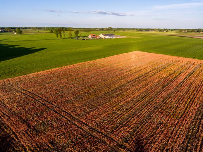 Met glysofaat bespoten velden vallen snel op: ze zijn helemaal oranje.