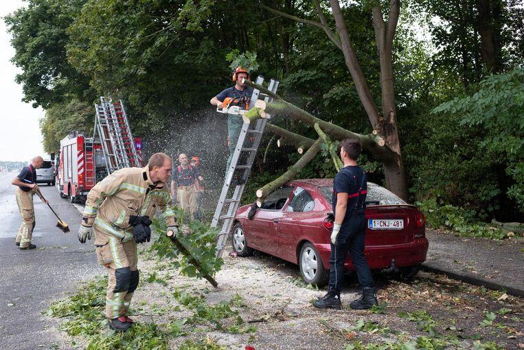 Brandweermannen zijn in de weer om de afgeknakte boom in stukken te zagen.