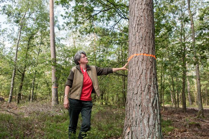 Jeannette Hoek naast een grove den die is aangemerkt voor de kop. ,,Doodzonde'', verzucht de inwoonster van Vierhouten.