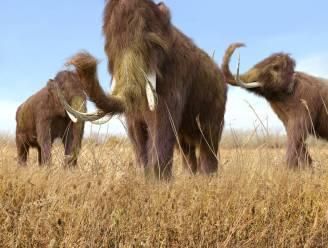 Opwarming aarde leidde tot uitsterven mammoet