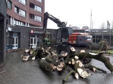 Oude kastanjeboom waait om op de Ridderhof in Oss - 'Ja, het gaat hier even héél hard'