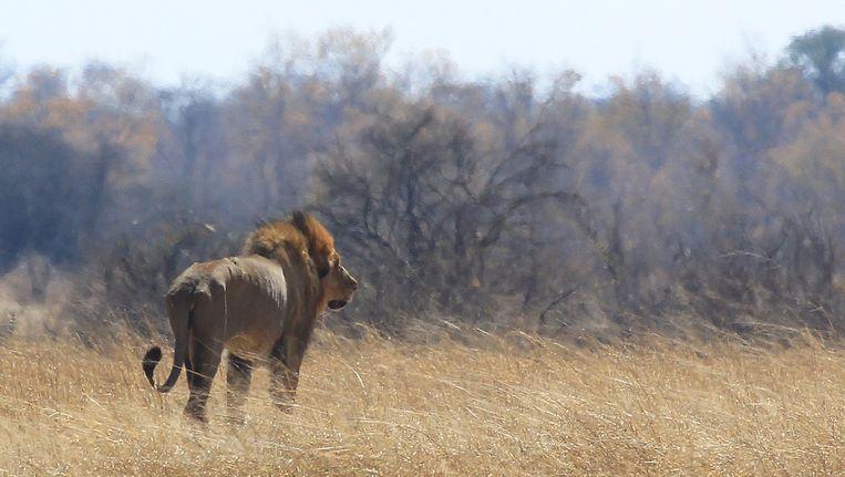 Archiefbeeld van het Hwange-park in Zimbabwe.