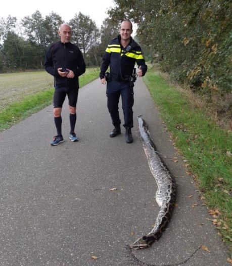 Nieuwsoverzicht |  4 meter lange python op straat gevonden - Ook popcornkramen in bioscoop verboden