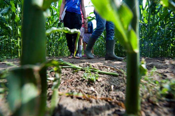 Kinderen in een maïsdoolhof.
