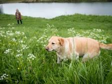 Meer toezicht op loslopende honden in natuur Rhenen