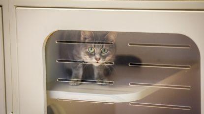 Achtergelaten katten in beslag genomen