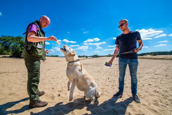 Boswachter Laurens Jansen beloont een hond die is aangelijnd met een snack.