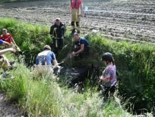 Brandweer redt paard uit diepe sloot in Enschede