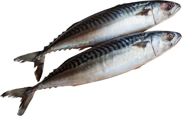 Twee verse makrelen.