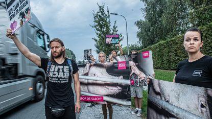 """Dierenrechtenactivisten nemen afscheid van varkens: """"Vlees is moord"""""""
