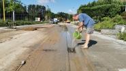 Grootscheepse rioleringswerken volstaan niet om moddersmurrie tegen te houden: bewoners Populierendallaan volop bezig met opkuis