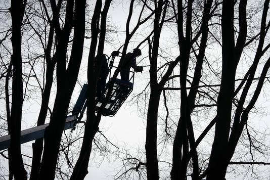 Het snoeien van bomen hoog in de bomen.