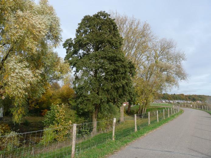 De Grebbedijk in Wageningen.