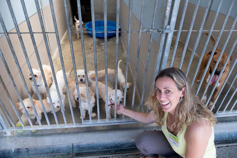 Sabine Slaets bij de verwaarloosde hondjes op de opendeurdag bij Dierenbescherming Mechelen.