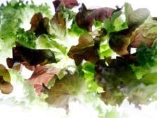 We dénken vooral dat we genoeg groente eten