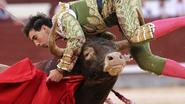 Stierenvechter zwaargewond door horens in hals