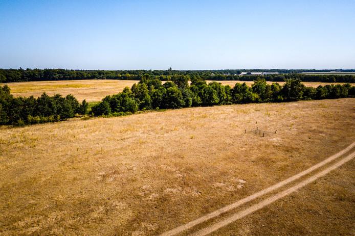 Door het uitblijven van neerslag drogen vennen op en kleuren weilanden geel, zo is te zien in de buurt van het Brabantse Someren.