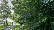 Burgerinitiatief Meer Bomen in Roeselare kant zich tegen bomenkap voor nieuwe overslagzone langs kanaal Roeselare-Leie