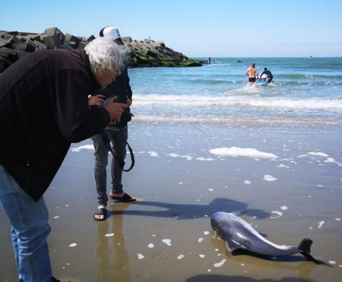 Eerder dit jaar raakte een bruinvis verstrikt in één van de netten