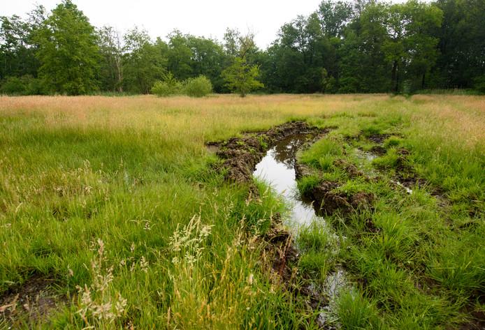 De inititiatiefnemers van GildeWoud willen meer natuur ontwikkelen, zoals hier in het Dommeldal in Waalre.