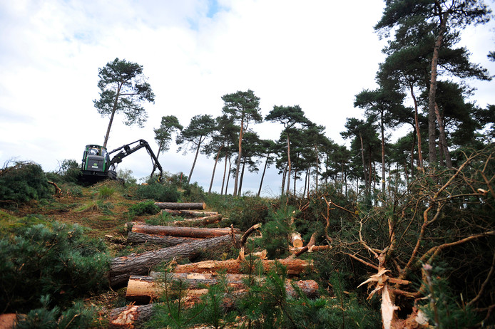 Bomenkap in de Kampina bij de Huisvennen.
