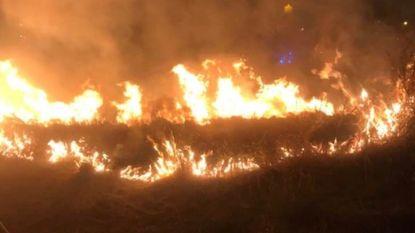 Vuurzee schrikt De Panne op: 300 m² duingras gaan in vlammen op