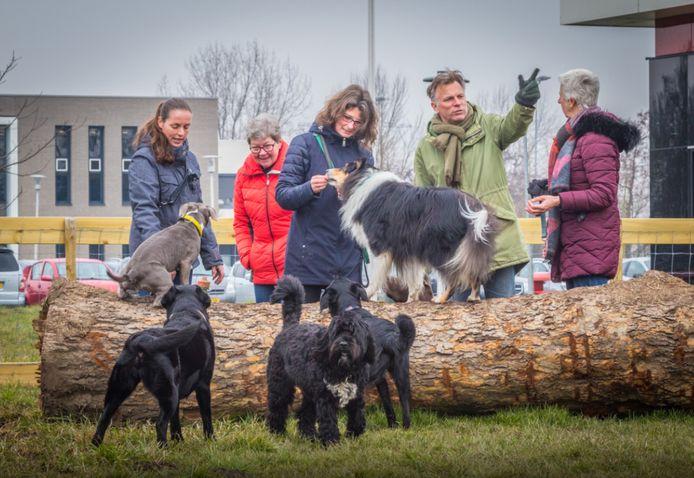 Archiefbeeld ter illustratie. Hondenspeeltuin in Maasdam.