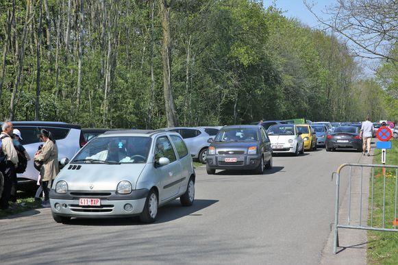 Met duizenden trokken dagjestoeristen dit paasweekend naar de paarse bloementapijten in het Hallerbos.  De parkings stonden vooral in de namiddag overvol.