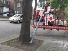 Meer bomen in Amersfoort 'besmet' met eikenprocessierups dan gedacht
