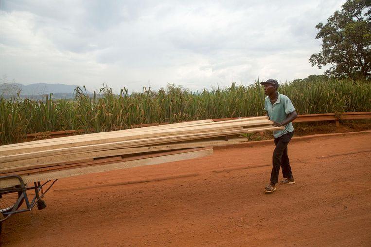 Houthandel in de Centraal Afrikaanse Republiek. Beeld Arie Kievit