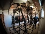 De grootste mammoet ter wereld staat in de Achterhoek