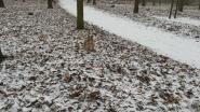 VIDEO: Hond leeft zich uit in sneeuwtapijt Bospark