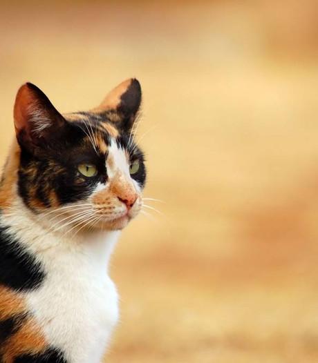 Bizar: kat uit auto gegooid op A28 bij Nunspeet