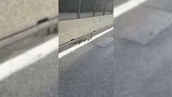 Autosnelweg wordt afgesloten voor eend en haar kroost