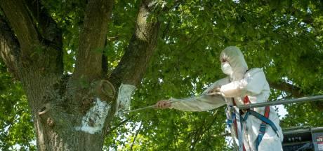Veenendalers gezocht die nestkastjes timmeren tegen de eikenprocessierups