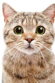 Britse Alex mag kat niet adopteren omdat hij homo is