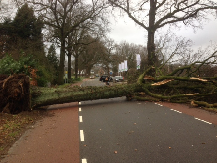 Een omgewaaide boom tussen Bennekom en Wageningen.