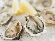 Nieuwe oester in aantocht