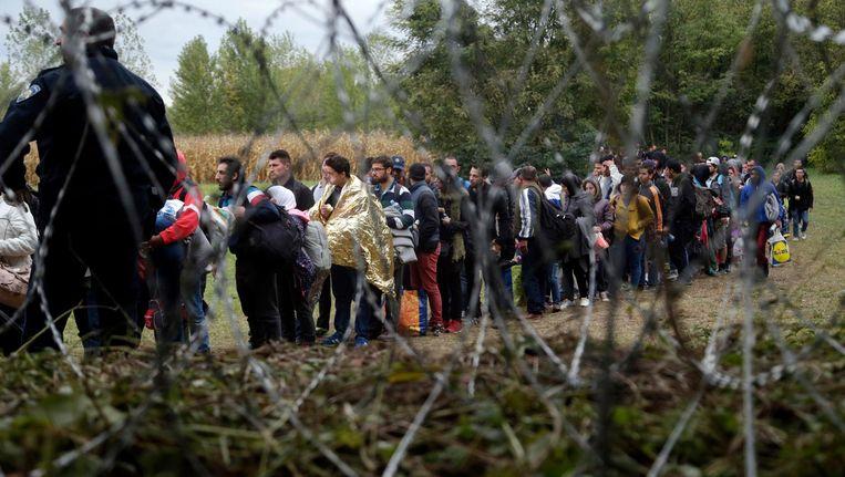 Migranten bij de Hongaarse grens. Beeld null