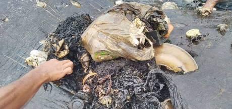 115 bekertjes! Bal van zes kilo plastic in maag van dode potvis