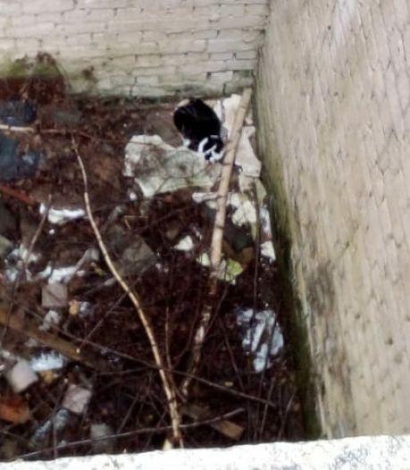 Nick en Jens vinden sterk vermagerde kat Mimi in 7 meter diepe put in Groesbeek: 'Een beetje trots'